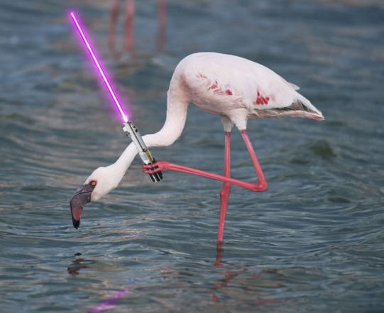 flamingo_with_lightsaber